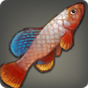 Grip Killifish