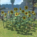 Sunflower Plot