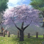 Eastern Cherry Tree