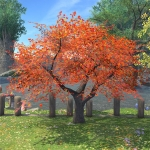 Autumnal Maple Tree